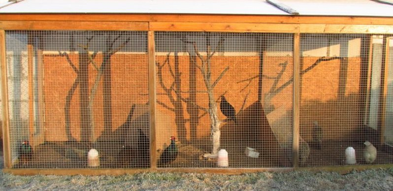 Фото: птичник для семей фазанов