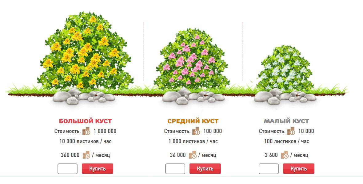 Разновидности чайных кустов