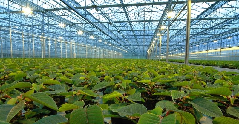 Тепличное хозяйство — прибыльный вид бизнеса