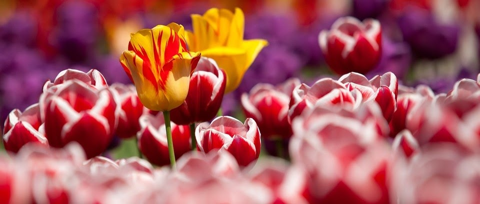 Цветочный бизнес — прибыльное и довольно простое в управлении дело