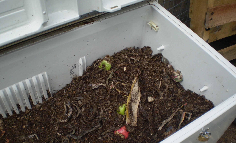 Разведение червей в холодильнике