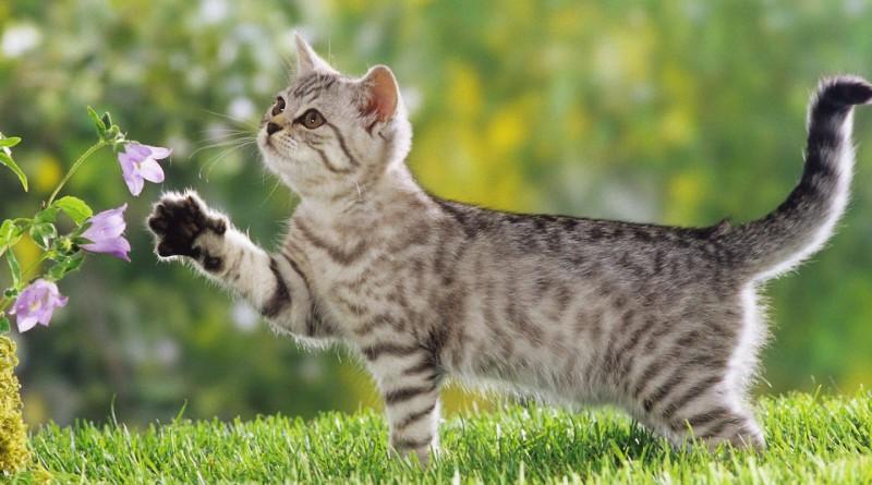 Разведение кошек - один из видов предпринимательства, не теряющий своей актуальности